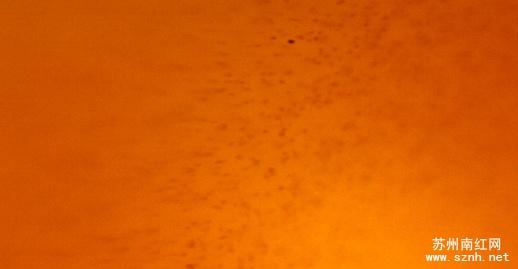 高倍显微镜下南红玛瑙与普通红玉髓的区别